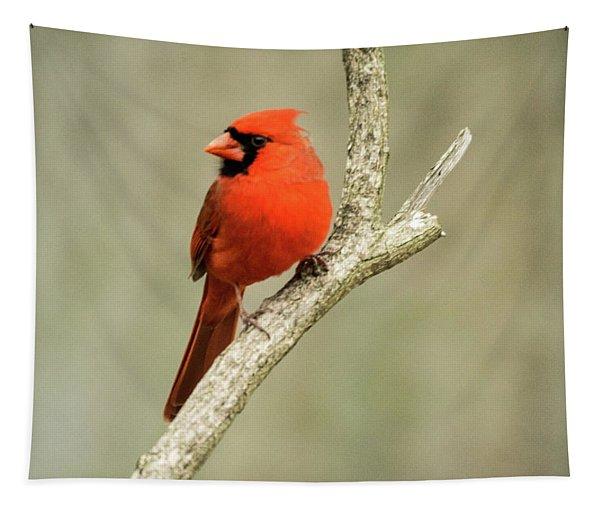Male Cardinal Gazing 2 Tapestry