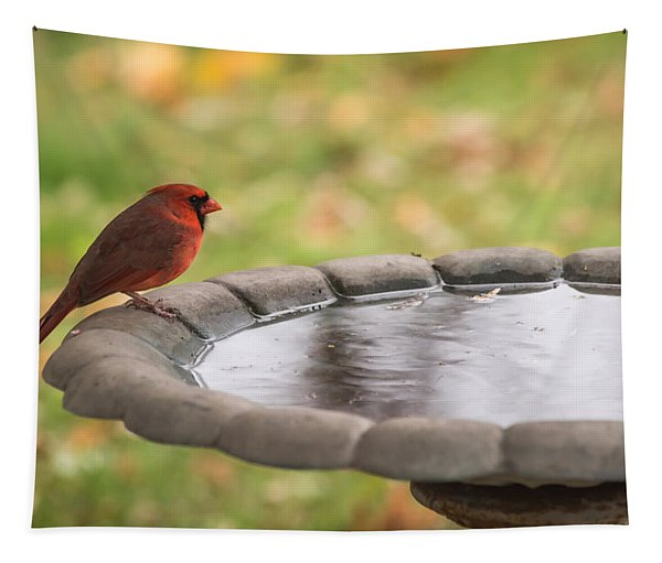 Male Northern Cardinal In Autumn Tapestry