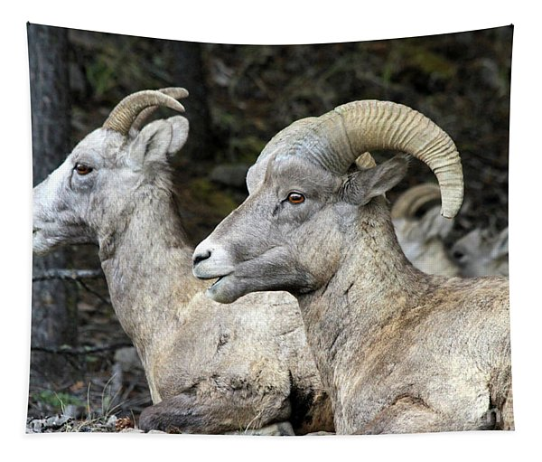 Mt Sheep  Tapestry
