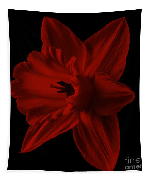 Narcissus Red Flower Square Tapestry