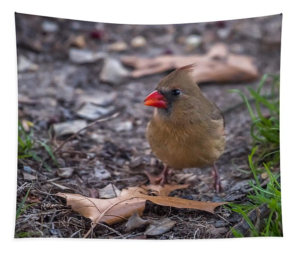Northern Cardinal Female With Leaves Tapestry