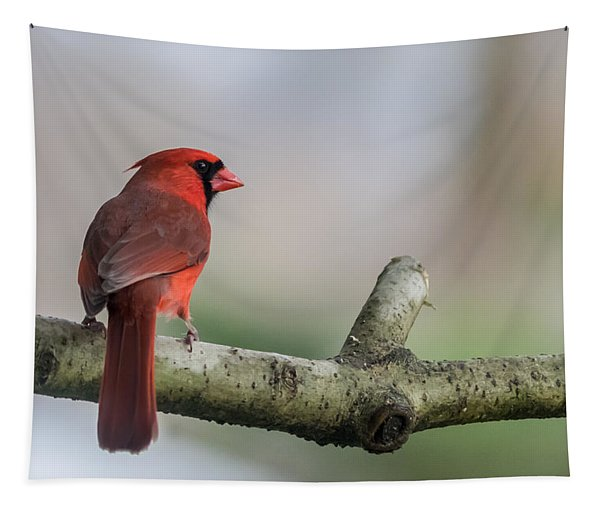 Northern Cardinal On Branch New Jersey Tapestry