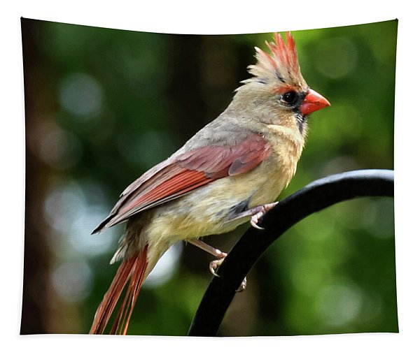 Northern Female Cardinal Tapestry