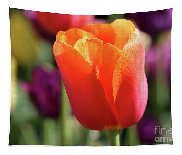 Orange Tulip In Franklin Park Tapestry