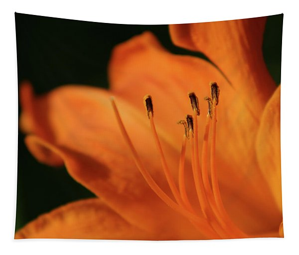 Orange Wave 3096 H_2 Tapestry
