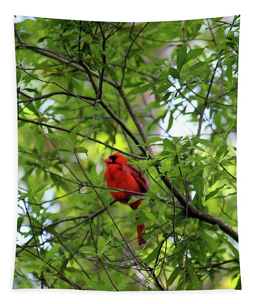 Perched Cardinal Tapestry