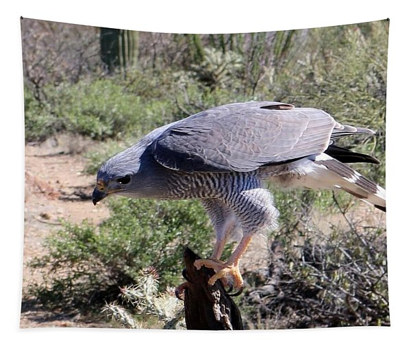 Tapestry featuring the photograph Peregrine Falcon  by Christy Pooschke