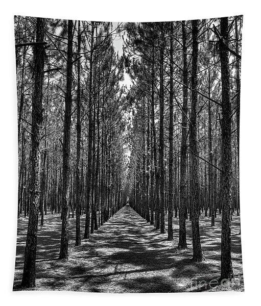 Pine Plantation 5655_6_7 Tapestry