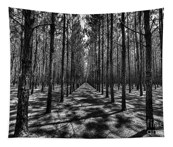 Pine Plantation Wide Tapestry