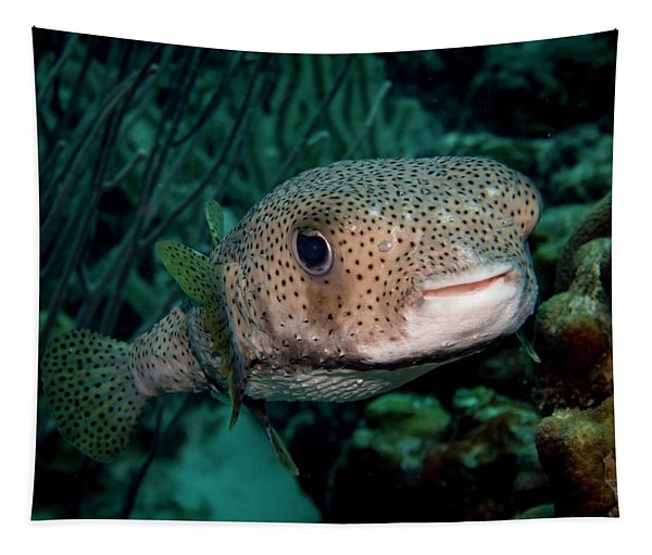 Porcupine Fish Tapestry