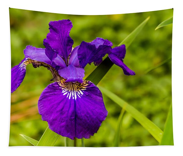 Purple Beauty Tapestry