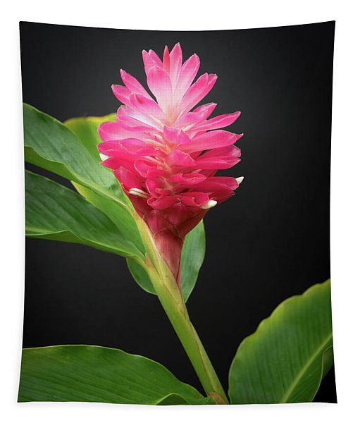Red Ginger Tapestry