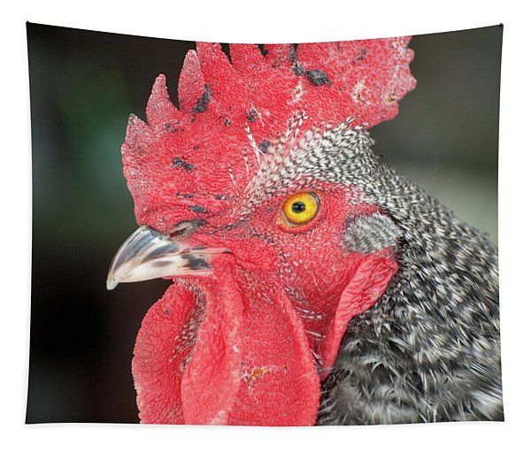Rooster Named Brute Tapestry