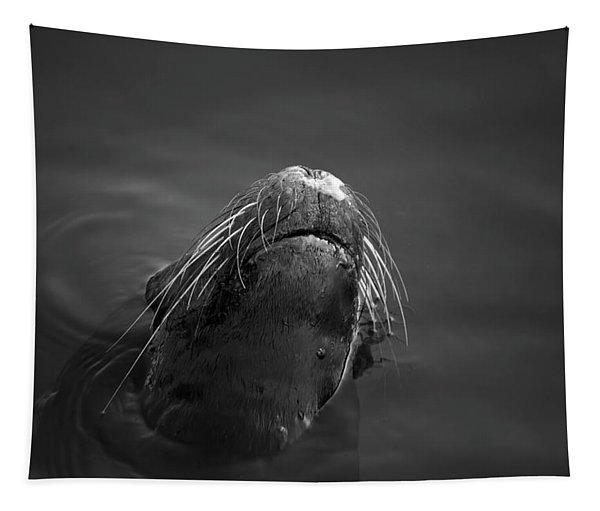Sea Lion V Bw Tapestry