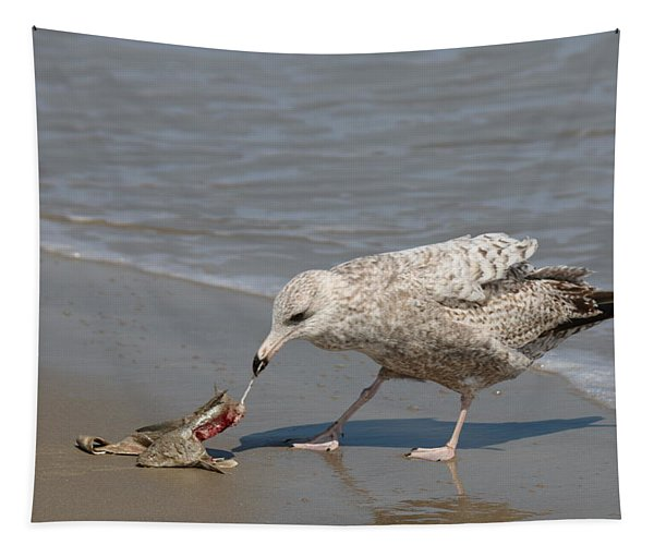 Tapestry featuring the photograph Seaside Snack - 3 by Christy Pooschke