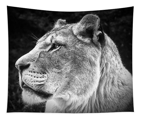 Silver Lioness  Tapestry