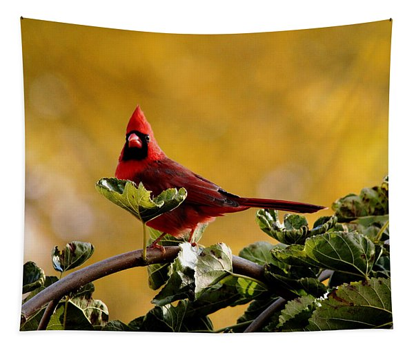 Startled Red Cardinal Tapestry