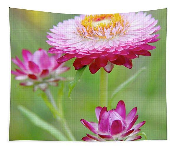 Strawflower Blossoms Tapestry