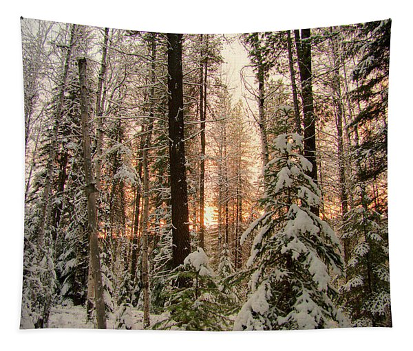 Sun Of Winter Trees Tapestry