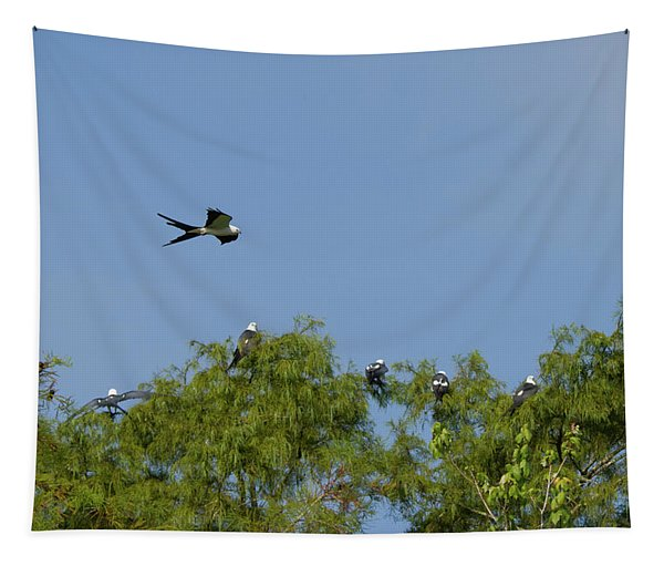 Swallow-tailed Kite Flyover Tapestry
