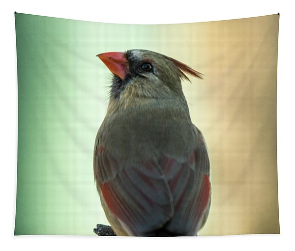 Up There Somewhere - Cardinal Tapestry