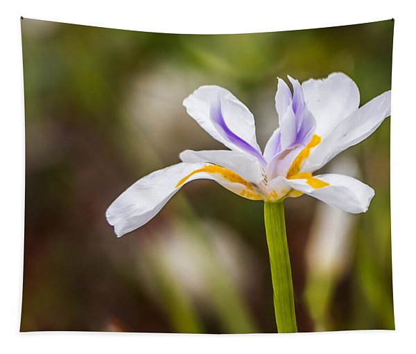 White Beardless Iris Tapestry