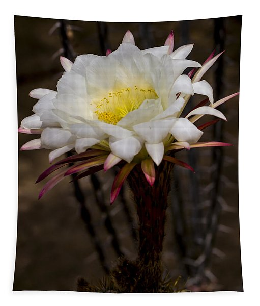 White Cactus Fower Tapestry
