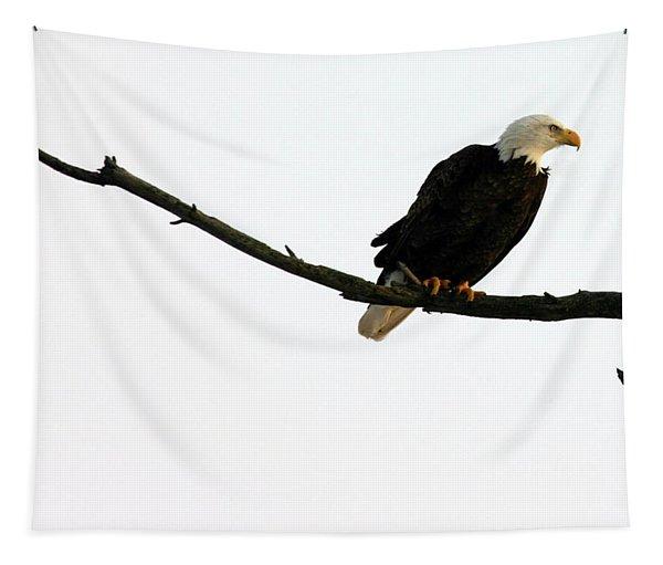 Bald Eagle 120501 Tapestry