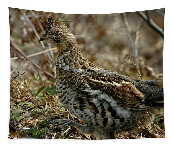 Ruffed Grouse 50702 Tapestry