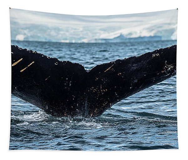 Whale In The Ocean, Southern Ocean Tapestry