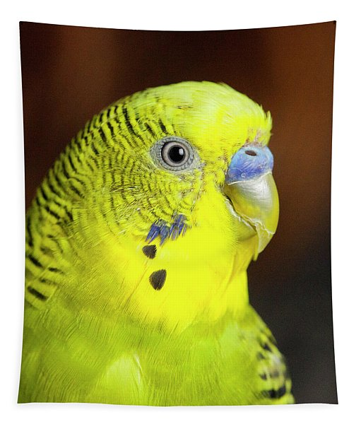 Portrait Of Budgie Birds Tapestry
