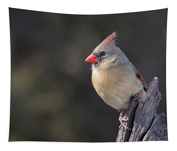 Ms Northern Cardinal Tapestry