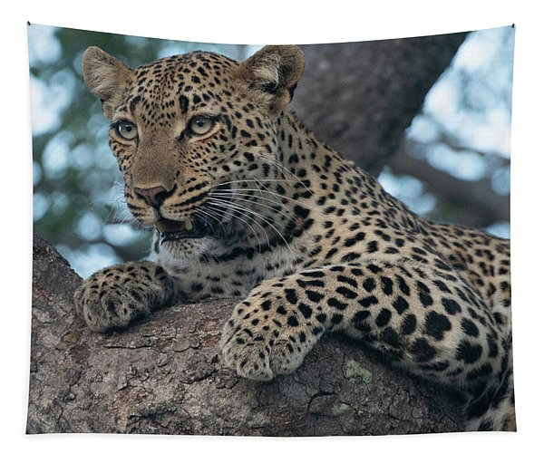 A Focused Leopard Tapestry