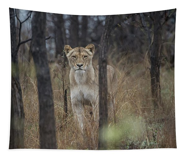 A Lioness In The Trees Tapestry