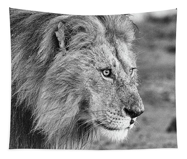 A Monochrome Male Lion Tapestry