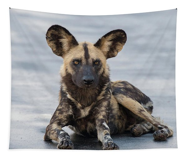 African Wild Dog Resting On A Road Tapestry
