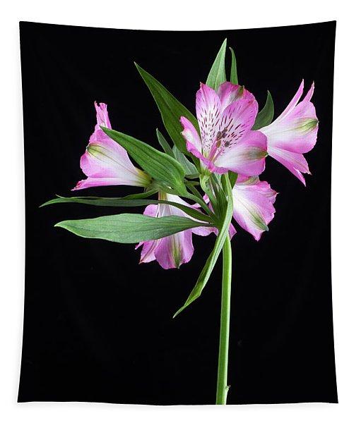 Alstroemeria Light Pink Tapestry