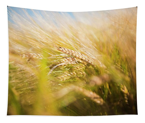 Background Of Ears Of Wheat In A Sunny Field. Tapestry