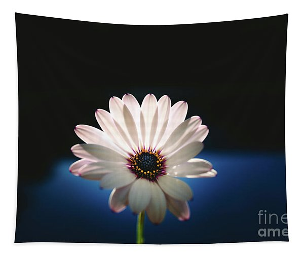 Beautiful And Delicate White Female Flower Dark Background Illum Tapestry