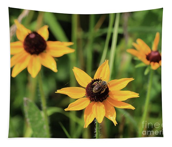 Black Eyed  Susan And Bee Tapestry