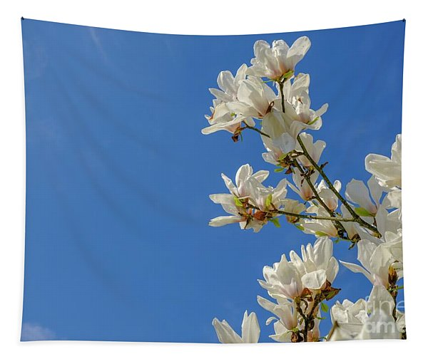 Blooming White Magnolia. Spring Tapestry