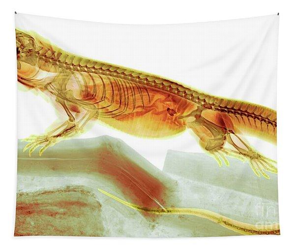 C025/8504 Tapestry