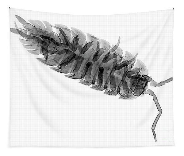C026/7526 Tapestry