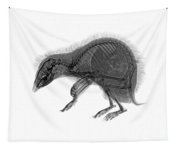 C037/9600 Tapestry