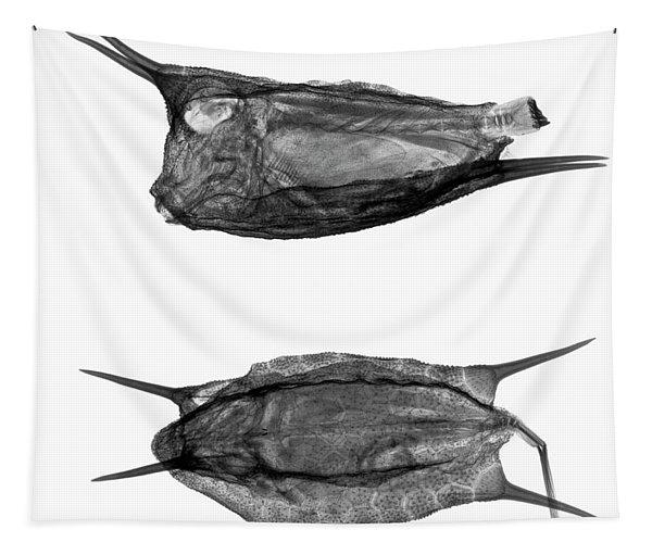 C038/4737 Tapestry