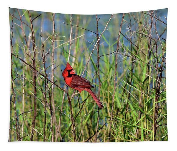 Cardinal In The Marsh Tapestry