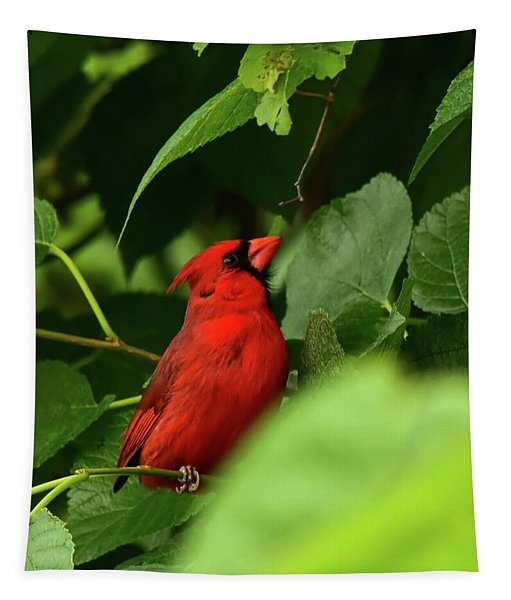 Cardinal Seeking Escape Route Tapestry