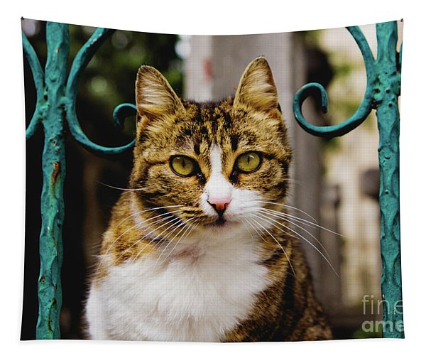 Cat On A Fence Tapestry