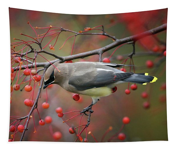 Cedar Waxwing 102206 Tapestry