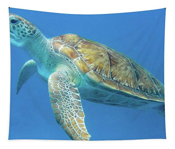 Close Up Sea Turtle Tapestry